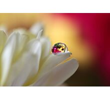 Floral reflection Photographic Print