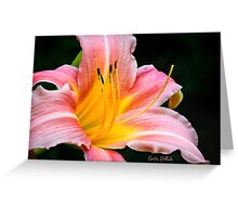Pink Daylily Greeting Card