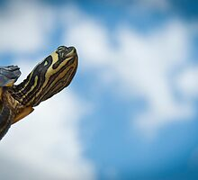 Turtle Dream by Juantolin