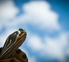 Still Dreaming by Juantolin
