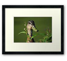 Flower Picking Framed Print