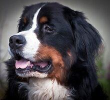 Bernie the Dog by Wanda Dumas