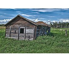 Alberta Cow Shed Photographic Print