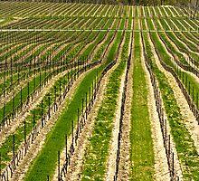 Flat Rock vineyard by bonsta