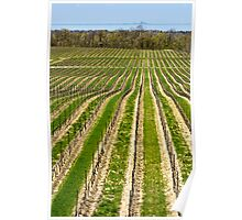 Flat Rock vineyard Poster