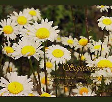 September's Delightful Daisies by Vickie Emms