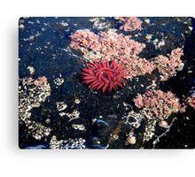 Little Red Sea Enemy Canvas Print