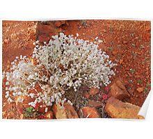 Flinders Flora Poster