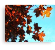 Red Maple Canvas Print