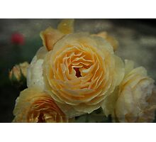 Textured Rose - JUSTART © Photographic Print