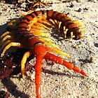 centipede by MzLexy