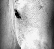 The White Horse's Eye by daisyriding