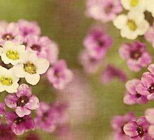 Spring colours by Anne Staub