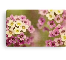 Spring colours Canvas Print