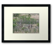 ~ Loose in the top paddock ~ Framed Print