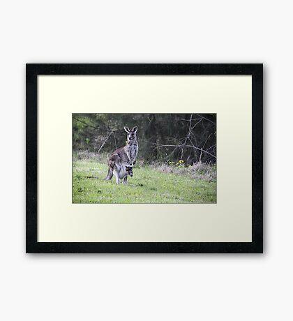 Mummy and Joey Framed Print
