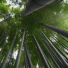 Bamboo Forest in Kamakura, Japan by Bruno Beach