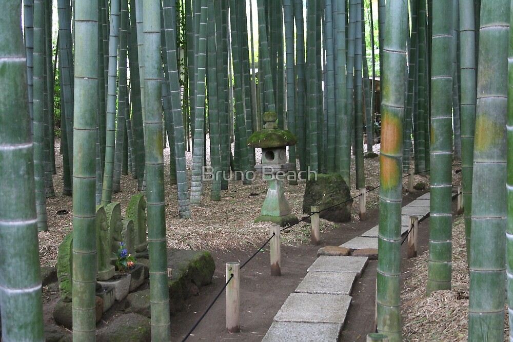 Bamboo Forest in Kamakura, Japan by Bruno Beach