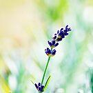 Intesity! Flower Photography by William Martin
