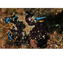 Painted Frogfish Photographic Print