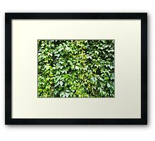 Green leaves after rain Framed Print