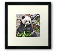 San Diego Zoo Framed Print