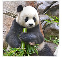 San Diego Zoo Poster