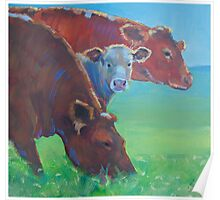 Two and a Half Cows Poster
