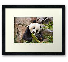 Panda and Bamboo Framed Print