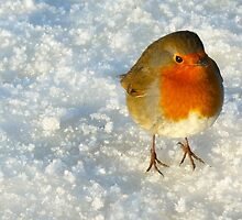 Robin in the Snow by David Alexander Elder