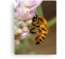 """Bee"" Canvas Print"