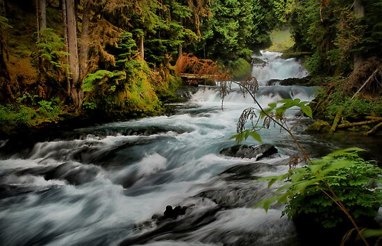 McKenzie River Beauty by Charles & Patricia   Harkins ~ Picture Oregon