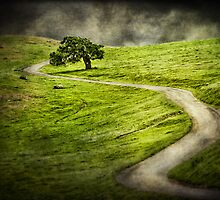 The Long & Winding Road by frankc