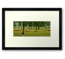 Indian Shepherd-1/2011 Framed Print