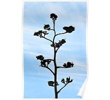 Century-Agave Americana Poster