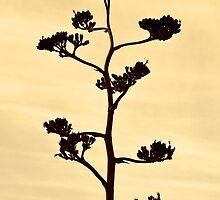 Century-Agave Americana Sepia by Kim North