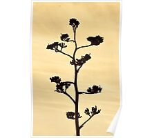 Century-Agave Americana Sepia Poster