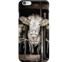 Cows! iPhone Case/Skin