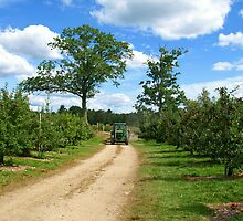 A Country Road among an Apple Orchard. by Lee d'Entremont