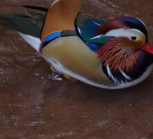 Mandarin Duck Sticker