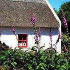 Irish Countryside    by Kim North