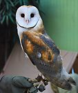 Barn Owl by Ron Hannah