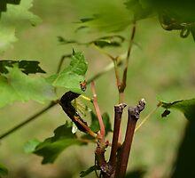 Caterpillar by Leashka