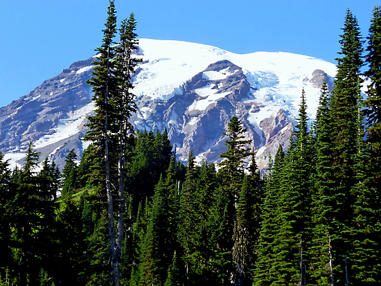 Mount Rainier from Paradise by Elaine Bawden