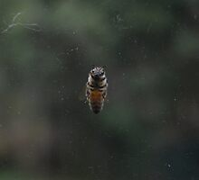 Bee by Leashka