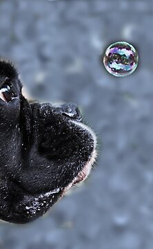 It's A Bubble -Boxer Dog Series- by Evita
