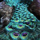 Peacock Trail by Karol Livote