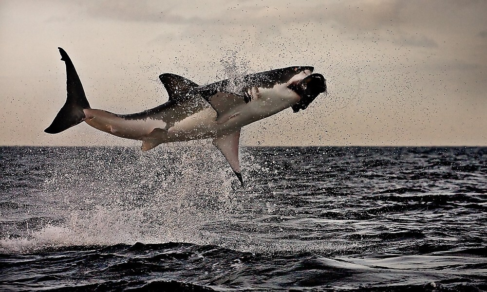 Air Jaws by Vincent Riedweg