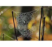 Spider's Creation Photographic Print