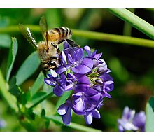 September Bee Photographic Print